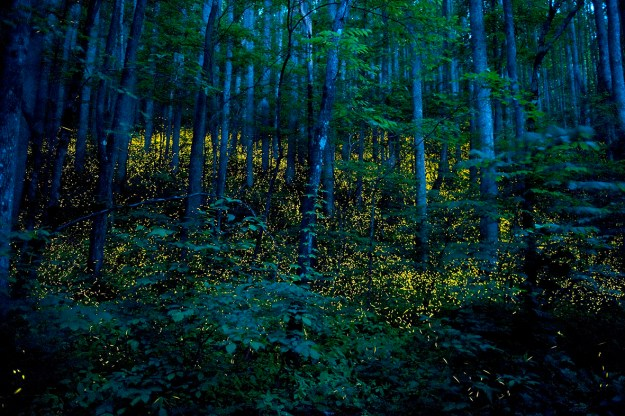 5. Forests in the Smoky Mountains of Elkmont, Tennessee