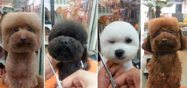 Round and Square dog hairstyles 3