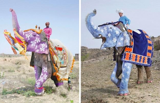 Elephant Festival In India 6