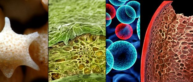 Foods Under The Microscope