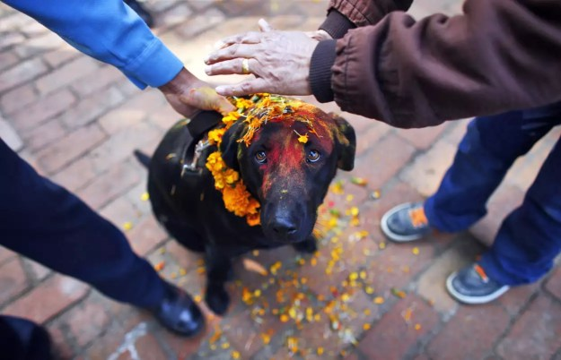 Nepal's Festival To Celebrate Dogs 7