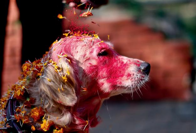 Nepal's Festival To Celebrate Dogs 8