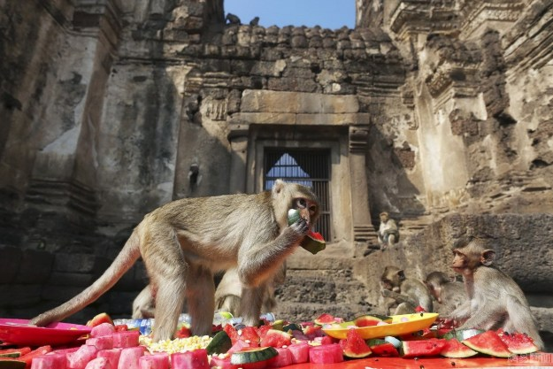 The Monkey Buffet Festival In Thailand 3