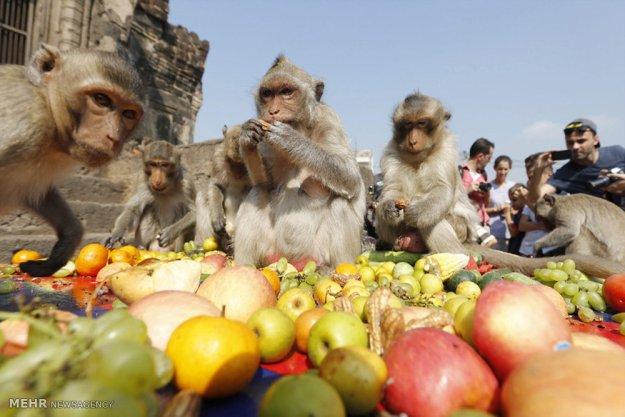 The Monkey Buffet Festival In Thailand 4