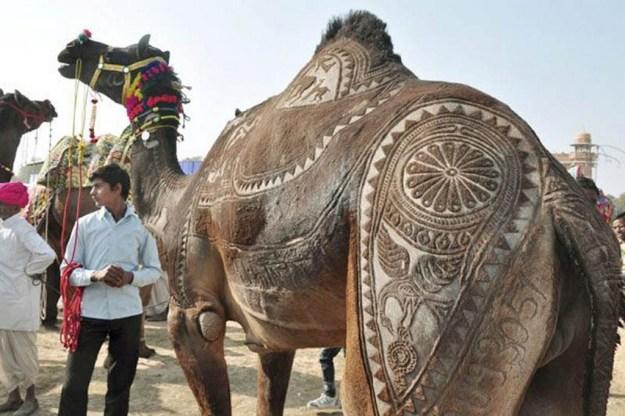 The Pushkar Camel Fair In Rajasthan, India 3