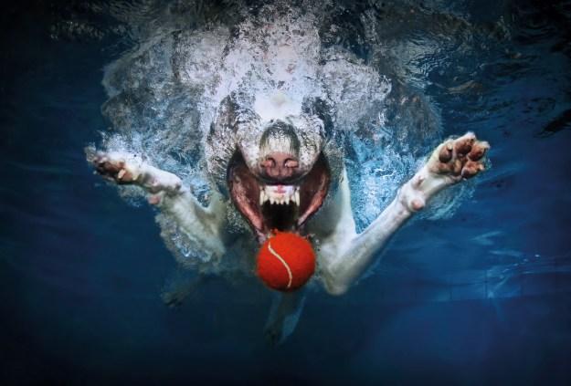 Underwater Dogs By Seth Casteel 13