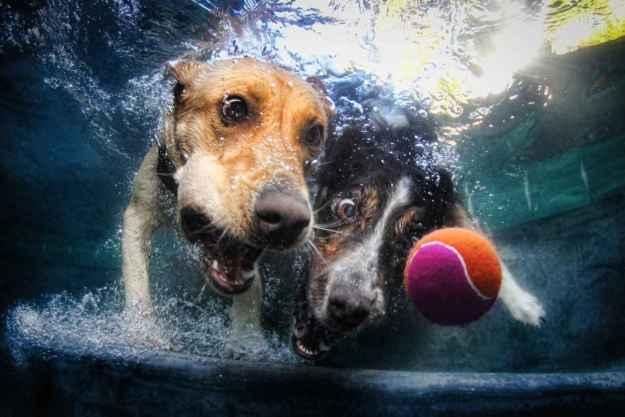 Underwater Dogs By Seth Casteel 5