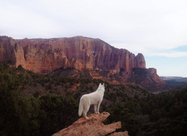 Alone With 53 Thousand Followers- Incredible Adventures Of John Stortz And His Dog 3