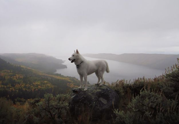 Alone With 53 Thousand Followers- Incredible Adventures Of John Stortz And His Dog 6