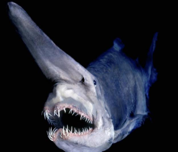15 of The Most Terrifying Animals You Never Knew About 17