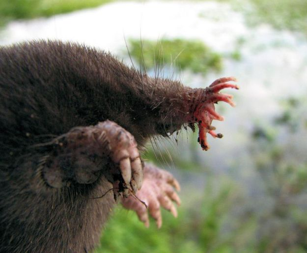 15 of The Most Terrifying Animals You Never Knew About 7