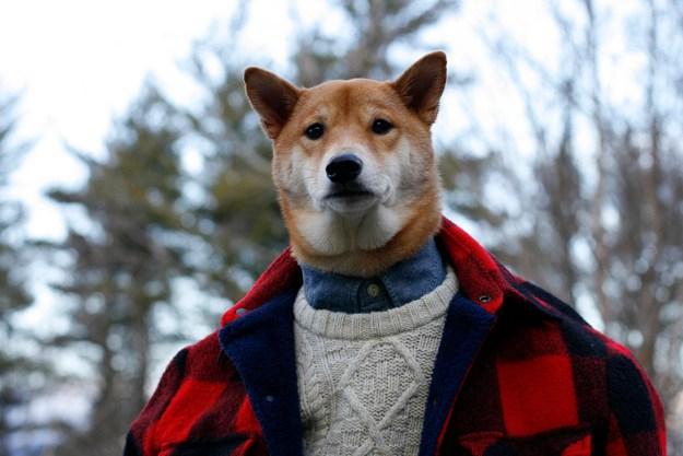 most-popular-internet-dogs-10