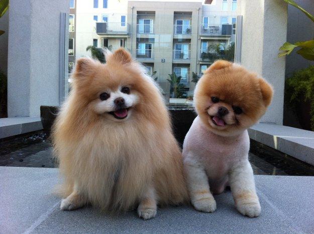 most-popular-internet-dogs-23
