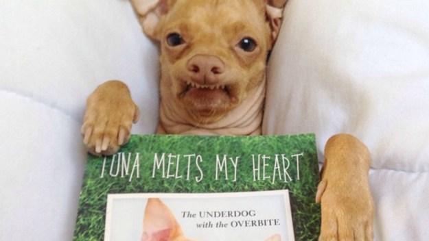 most-popular-internet-dogs-27