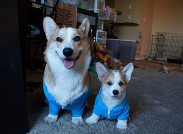 most-popular-internet-dogs-33