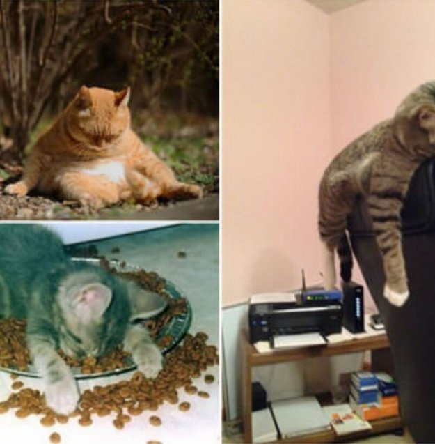 poor-animals-that-had-too-much-to-drink-last-night-13