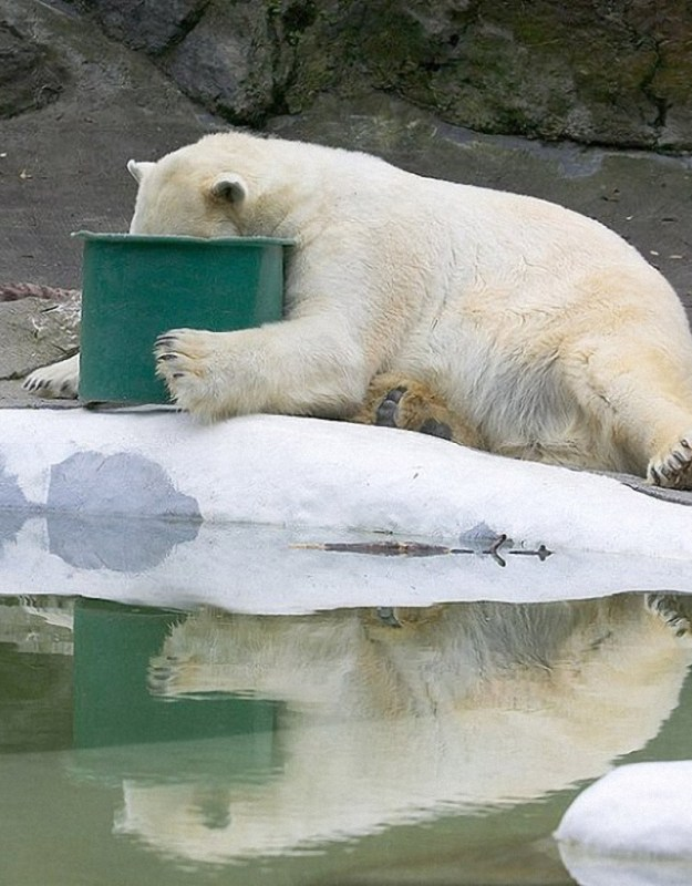 poor-animals-that-had-too-much-to-drink-last-night-14