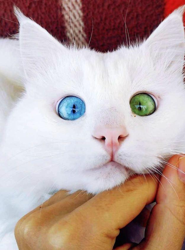 Beautiful Mutations 15 Staggering Photos of Heterochromia15