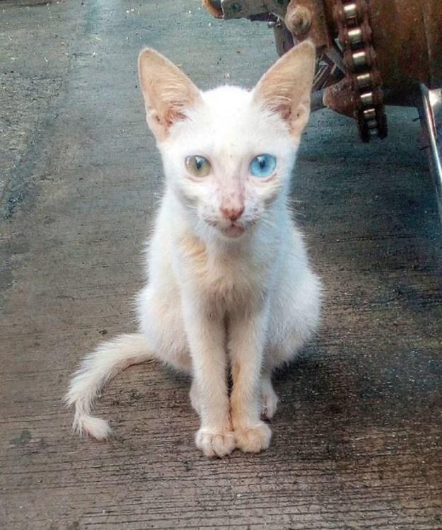 Beautiful Mutations 15 Staggering Photos of Heterochromia6