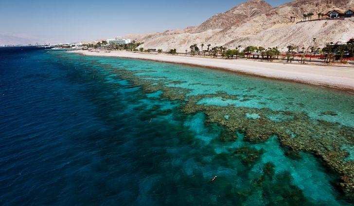 البحر الاحمر    10 من أقذر البحار في العالم    التوت الدماغ