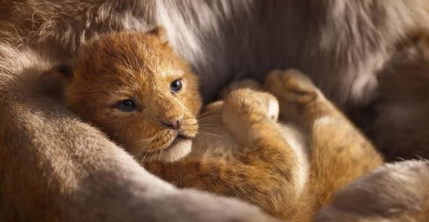Lion King digital 3D medium | Disney's Live-Action Simba Was Based on the Cutest Lion Cub Ever! | Brain berries