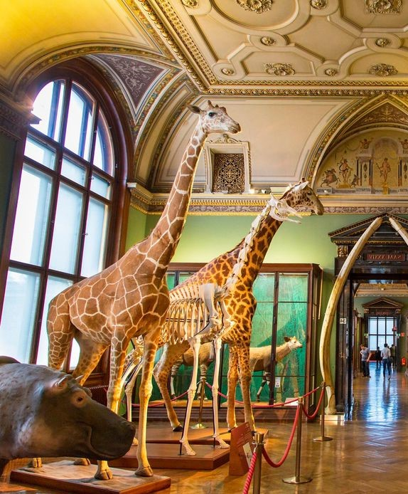 Natural History Museum (Vienna) inside #2 | 6 Best Natural History Museums In The World | Brain Berries