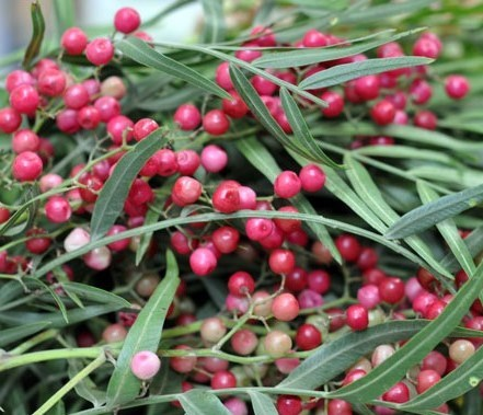 Pink Peppercorn – $100/kg | Top 7 Most Expensive Spices | Brain Berries