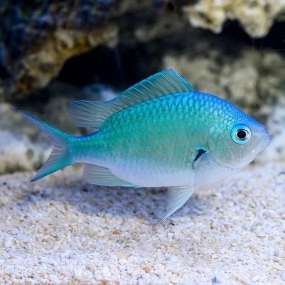 金牛座(4月20日至5月20日):外来鱼类|  脑浆果