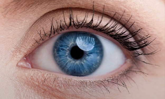 Our eyes perceive things upside down  | 6 Interesting  Facts About the Human Eye | Brain Berries
