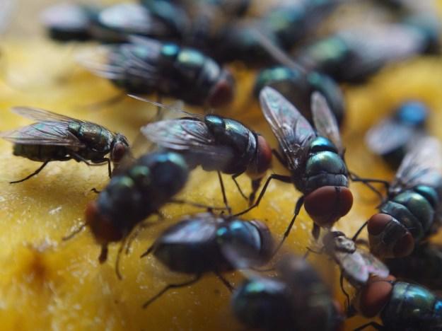 Flies are Deaf | Seven Sensational Facts About Sound | Brain Berries