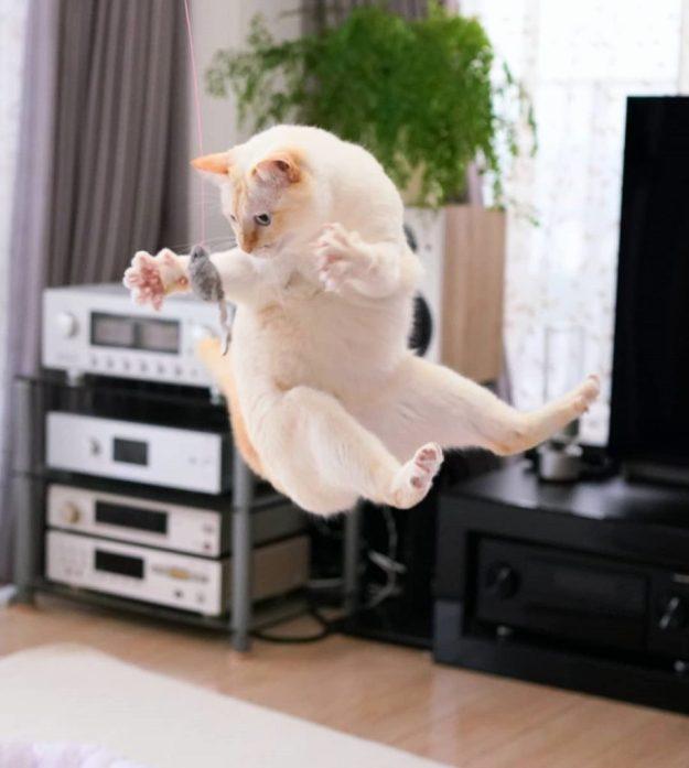 Japanese Dancing Cat #14 | Brain Berries