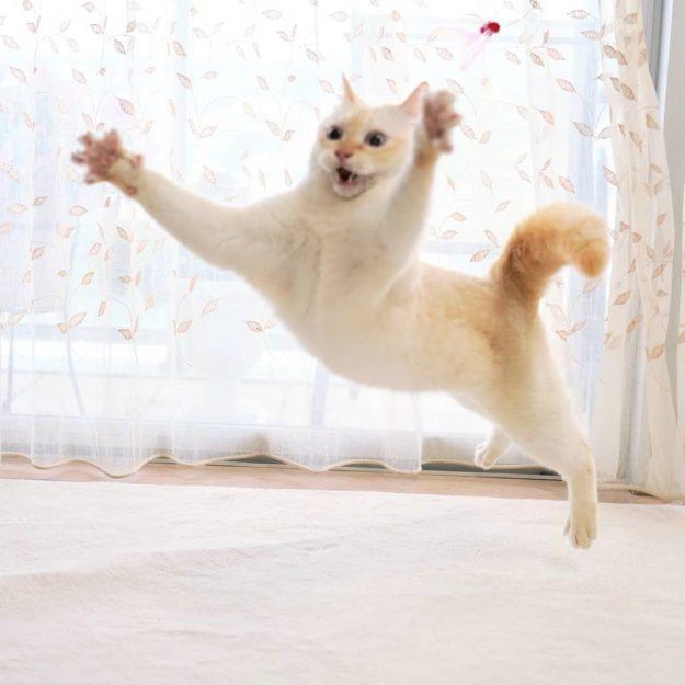 Japanese Dancing Cat #17 | Brain Berries