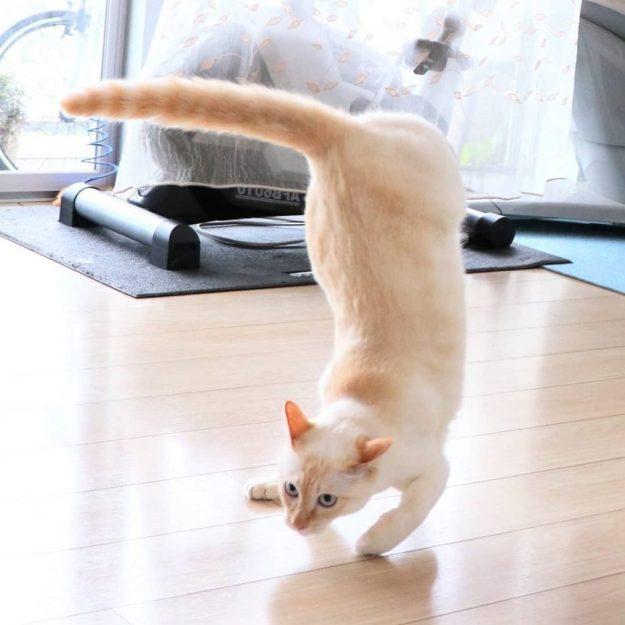 Japanese Dancing Cat #5 | Brain Berries