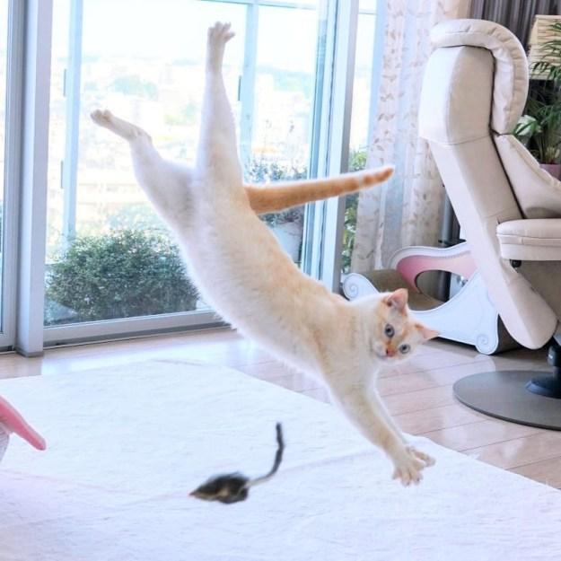 日本跳舞猫吹响了互联网! |  脑浆果