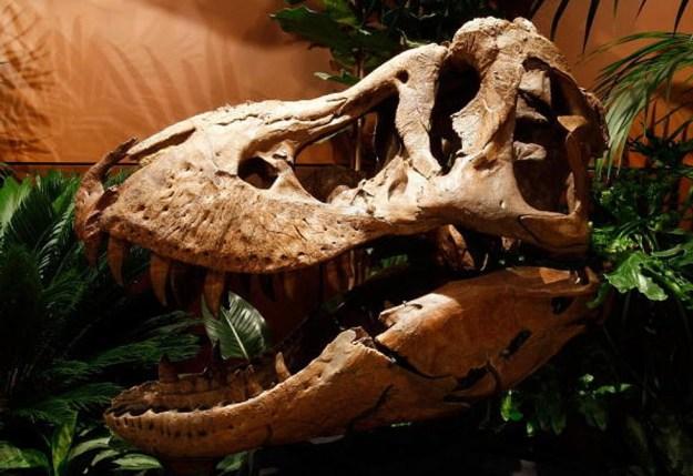 The Stolen T-Rex | Top 8 Biggest Things Ever Stolen | Brain Berries