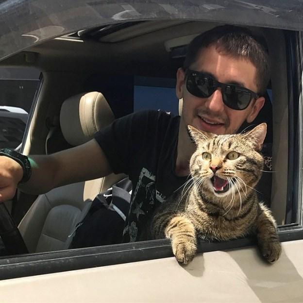 Горячая дискуссия в соц сетях | Как кот Виктор стал звездой социальных сетей и мотиватором для похудения| Brain Berries