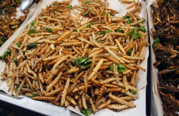 Мучные черви | 6 насекомых, которые в будущем могут заменить нам еду | Brain Berries