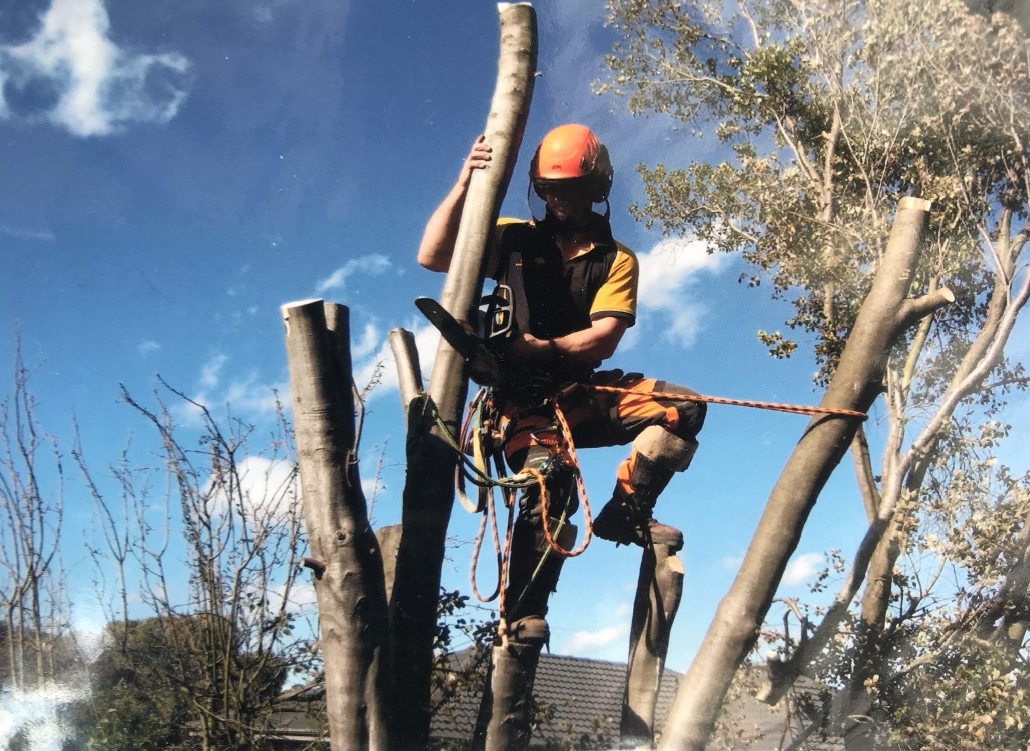 1. Arborists   Top 9 Most Dangerous Jobs in the World   Brain Berries