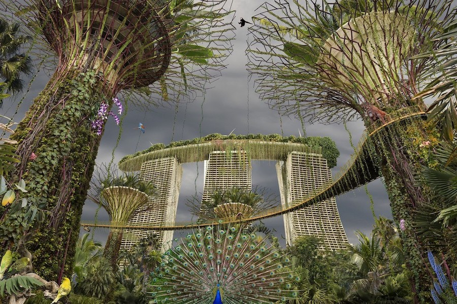 What Would Cities Look Like If Humans Disappeared #12   Brain Berries