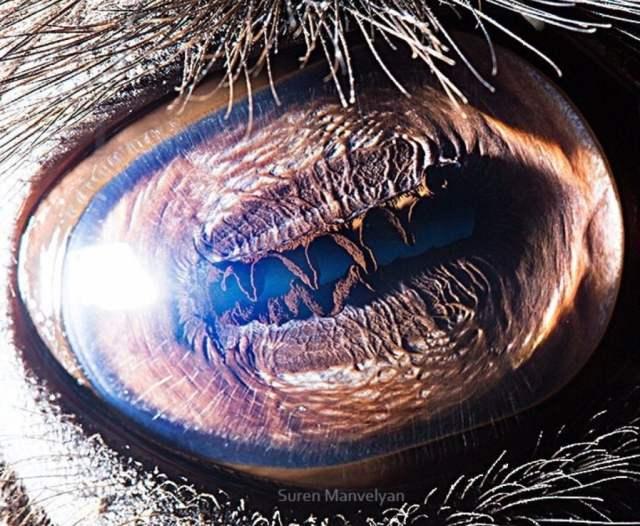 الجمل |  مصور يكشف عن لقطات ماكرو لعيون الحيوانات وتبدو مبهرة |  زيسترادار