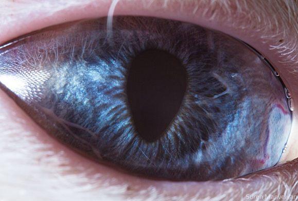 القط |  مصور يكشف عن لقطات ماكرو لعيون الحيوانات وتبدو مبهرة |  زيسترادار
