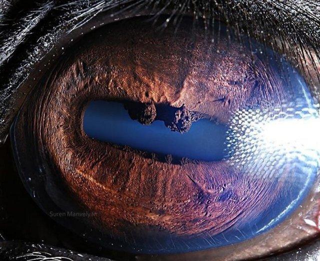 الحصان |  مصور يكشف عن لقطات ماكرو لعيون الحيوانات وتبدو مبهرة |  زيسترادار