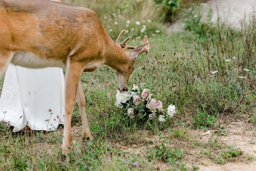 A Wedding Photoshoot To Remember Gets Interrupted By A Deer #7   Her Beauty