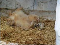 ホッキョクグマ 赤ちゃん