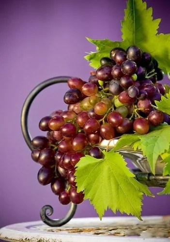 Сорт винограда Рубин