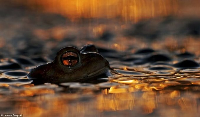 Среда обитания животных— невозможные конкурсные фотографии!