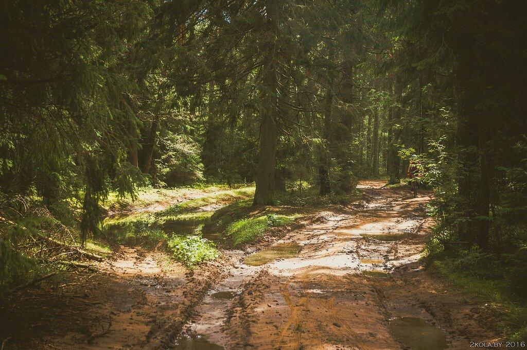 дороги в лесу