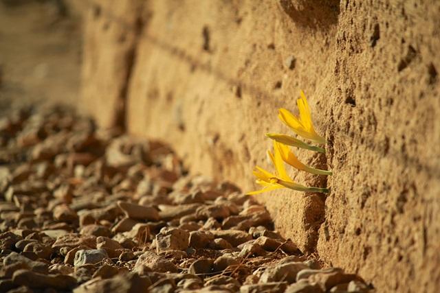 Жизнь найдет выход! Фото растений, которые не сдаются