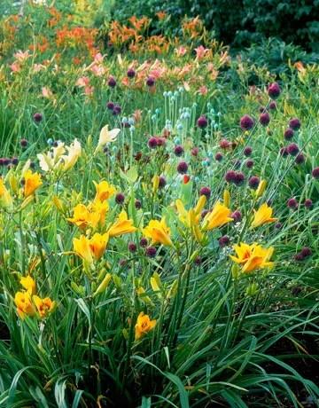 красивый сад своими руками фото