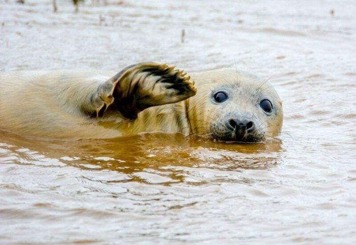 20 финалистов конкурса самых смешных фотографий дикой природы Comedy Wildlife Photography Awards